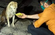 कोरोना महामारी के दौरान बेजुबान डॉग्स को वीरेन शर्मा खिला रहे खाना